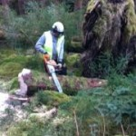 Chainsaw Course - photo 5