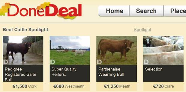 'FARMERS' GOOGLE': a page on the farming section of the DoneDeal website offering a variety of cattle breeds for sale