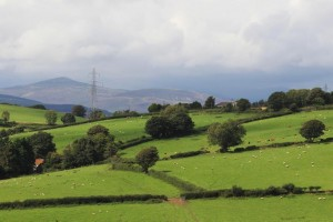This scheme differs from previous agri-environment schemes in N. Ireland