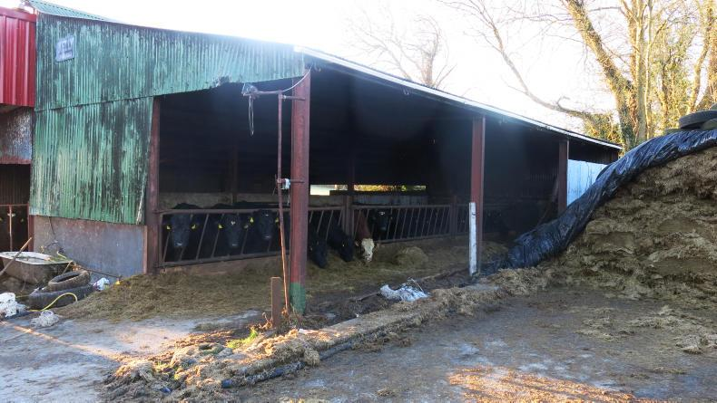 Slurry Gas Disaster On Galway Farm