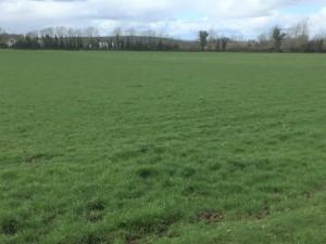 Grass-500-kg-March-16-1024x768