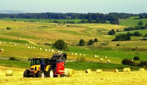 Donegal Farm