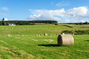 Farm near Culloden