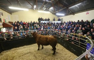 Hundreds of farmers attended the finale of Raphoe Mart's season 14/12/2018