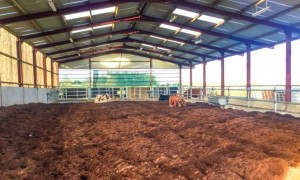 Peat Bedding in shed