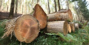 The IFA has welcomed the Minister's announcement to fund a study to assess the impacts of afforestation in Co. Leitrim