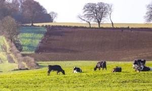 beef-Cattle-field-grass-green-outside-4F2A3377-750x450 (1)