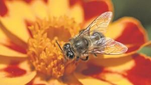 BeeFlowerGenericiStock_large