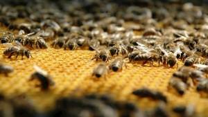 BeehiveGeneric_large