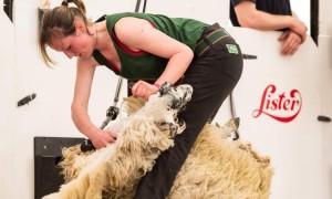 Joanne Devaney from Sligo - Queen of the Shears