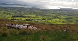 The Devaney farm at Barnaribbon, Drumcliff, Co. Sligo