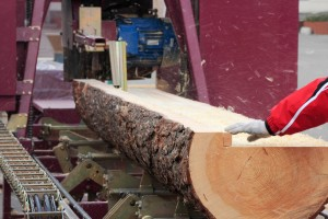 Only 50pc of each tree can be processed for sawn timber products.
