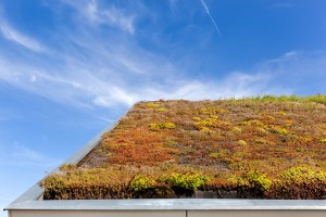 Consider a living roof (iStock-PA)