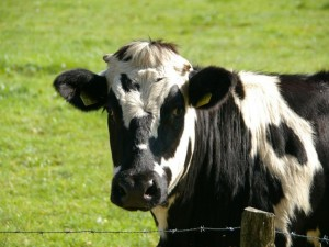 1585738613405.jpg--covid_19_hotline_for_farmers_in_ireland
