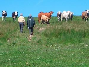 Farm inspection. Stock image