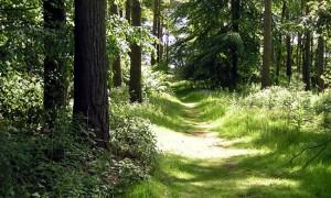Forestry-Knowledge-Transfer-Group-KTG-Scheme-2019-750x450