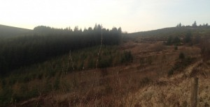 forestry-slieve-bloom1-730x375
