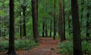 irish-forestry-750x450