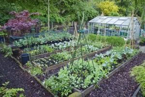 veg-garden-1525260021
