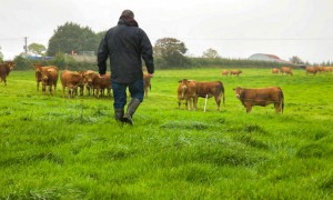 Limousin Cattle and Farmer-Agriland20-750x450